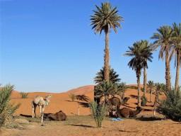 Merzouga, Marokko