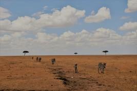 Maasai Mara, Kenia