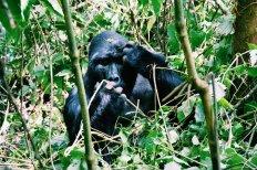 Bwindi, OEganda